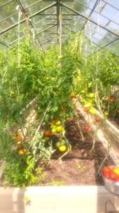 huerta de tomates